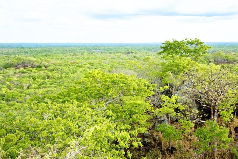 Полесья Brachystegia в национальном парке Kasungu стоковые изображения rf