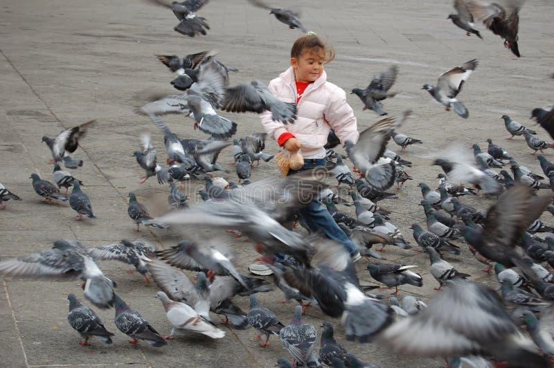 Полет вихрунов стоковая фотография