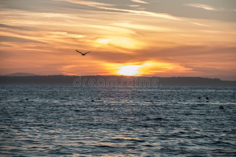 Полет захода солнца стоковые фотографии rf