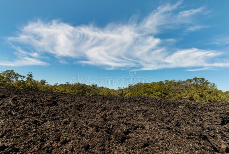 Поле лавы на острове Rangitoto стоковое изображение rf
