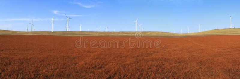 Поле ветротурбин стоковое фото