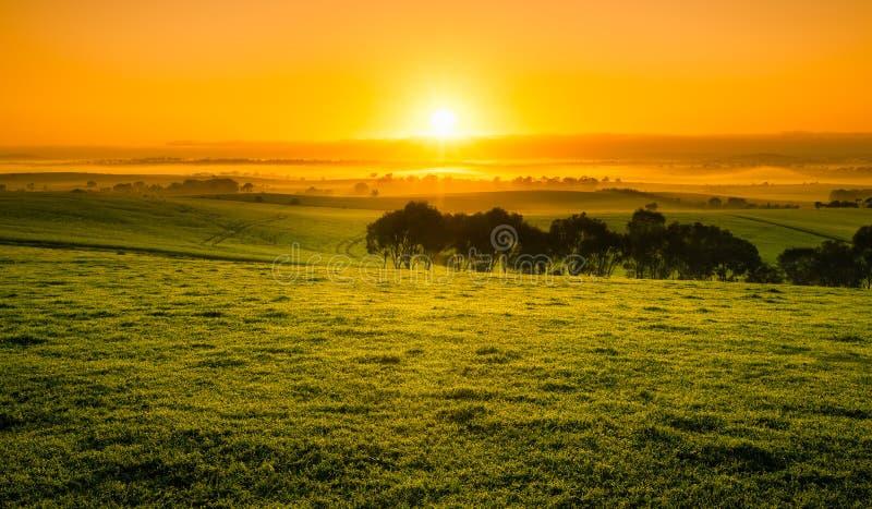 Поле восхода солнца стоковые фотографии rf
