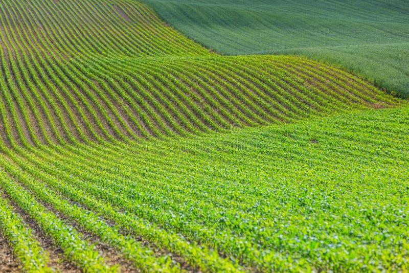 поле волнистое стоковое изображение rf
