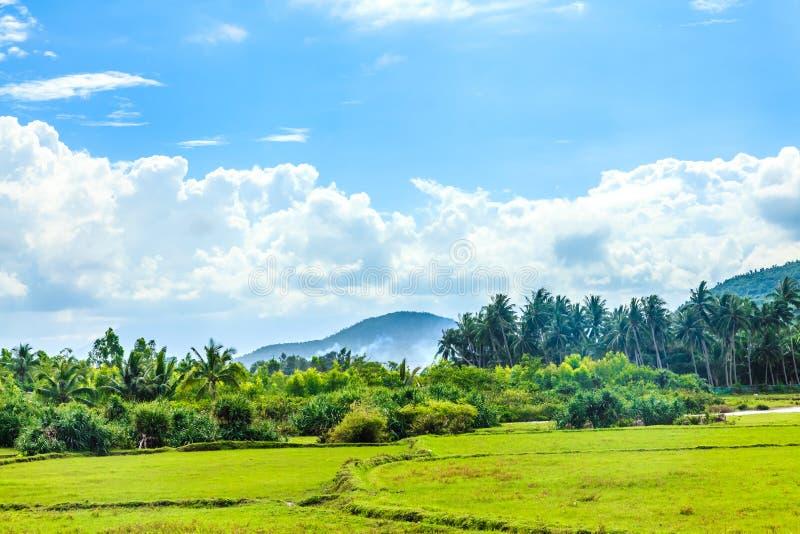 поле в Вьетнаме стоковое фото
