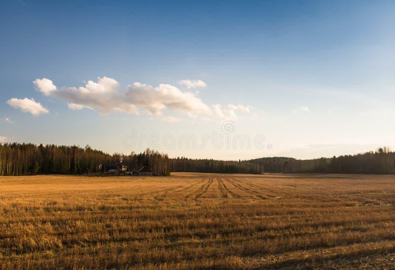 Поле в Финляндии стоковые фото