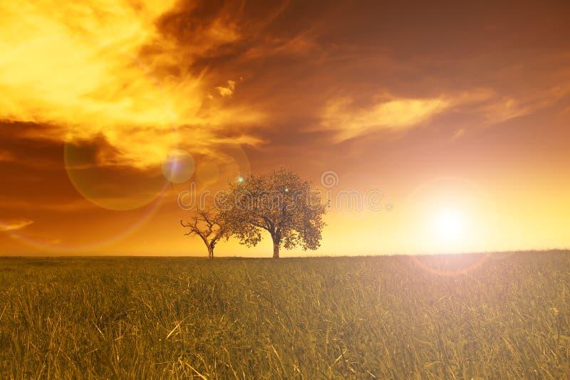 Поле, деревья, заход солнца стоковое изображение