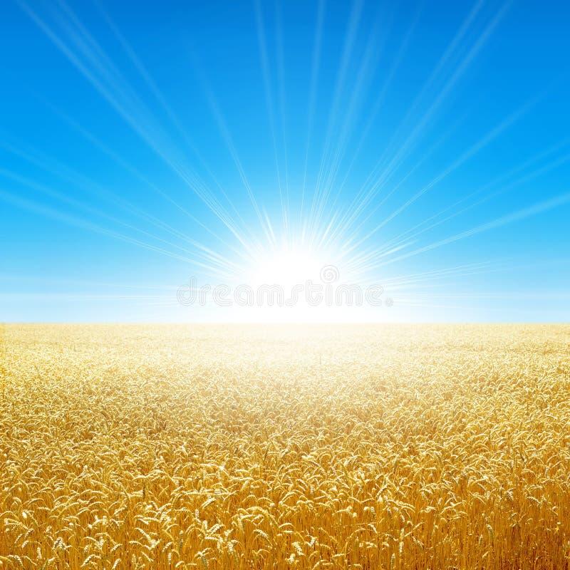 Поле лета под солнцем утра бесплатная иллюстрация