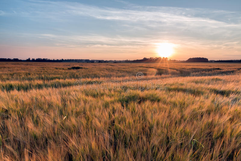Поле захода солнца лета стоковое изображение rf