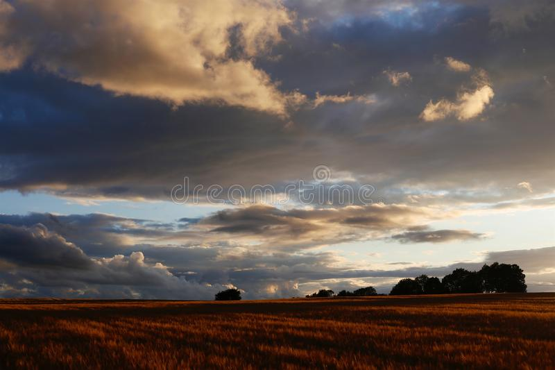 Поле & заход солнца ячменя Cotswolds стоковая фотография rf