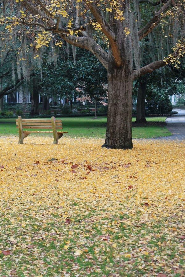 Поле листьев желтого цвета и скамейки в парке стоковые фото