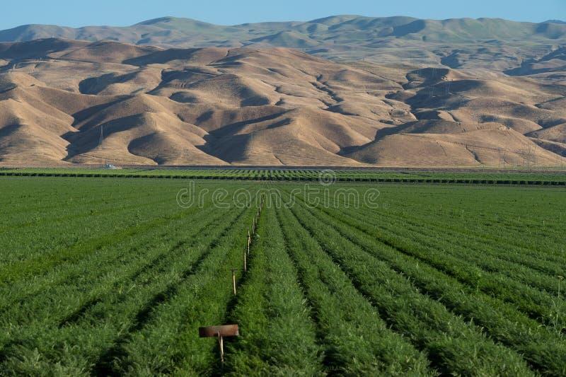 Поле и горы фермы альфальфы в южной Калифорнии стоковая фотография rf