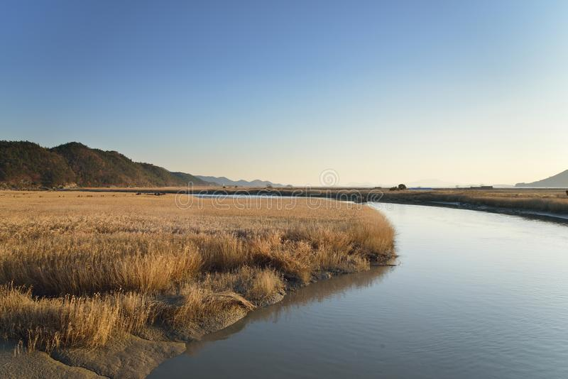 Поле и променад тростников в заливе Sunchoen стоковые фото
