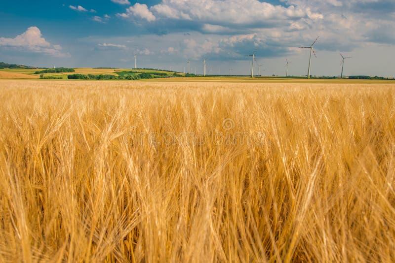 Поле и электростанция Rye стоковая фотография