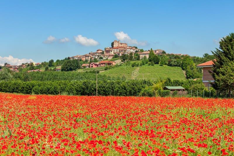 Поле красных маков в Италии стоковая фотография rf