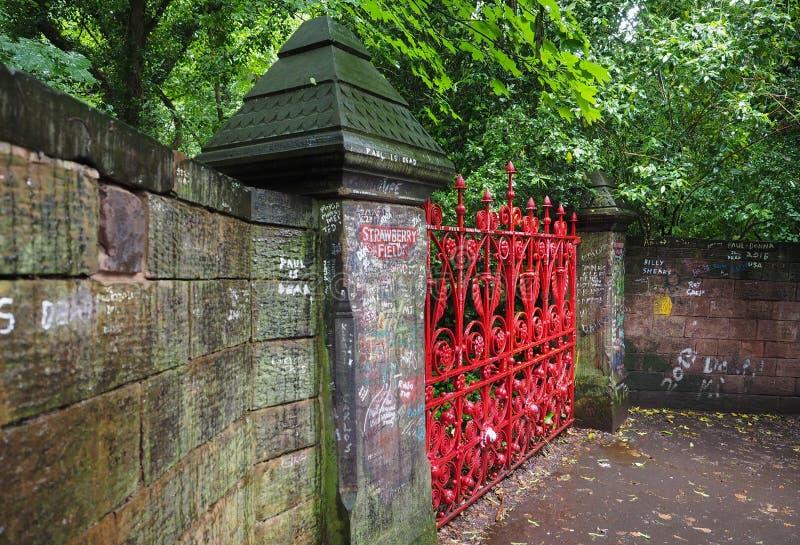 Поле клубники в Ливерпуле стоковая фотография rf