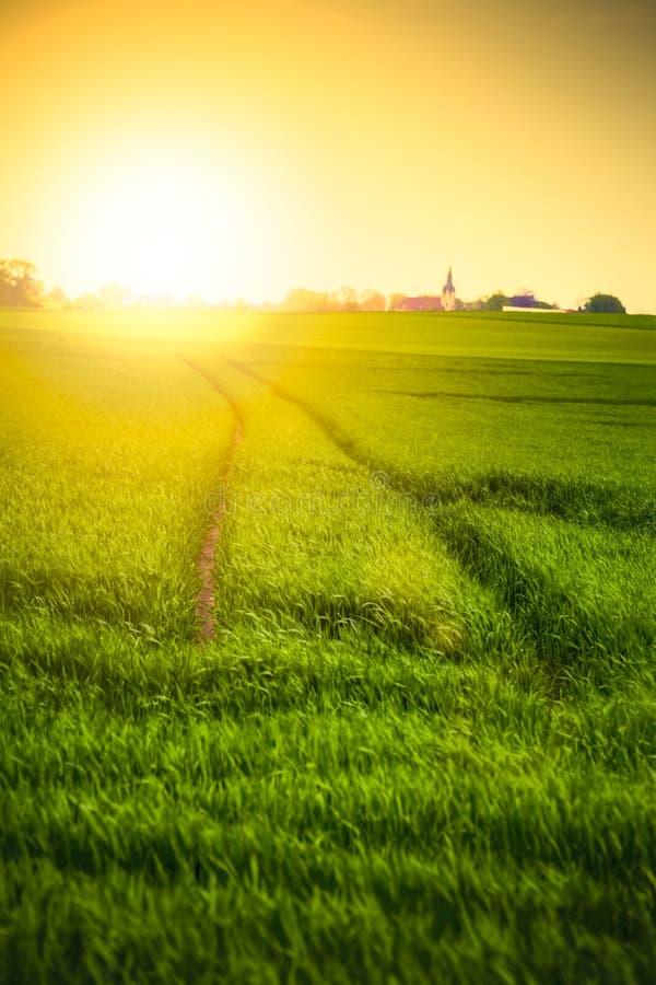 поле над заходом солнца стоковое фото