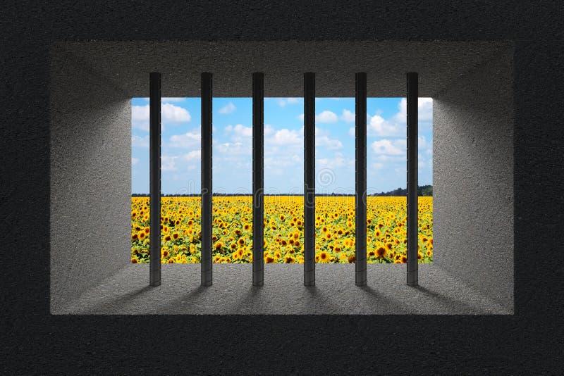 Поле неба и солнцецвета увиденное через бары тюрьмы в окне тюрьмы иллюстрация штока