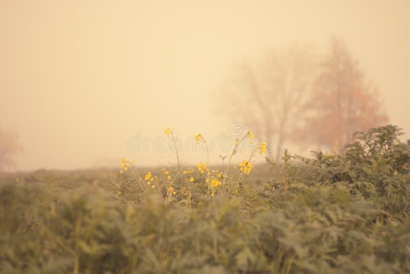 поле осени стоковое фото