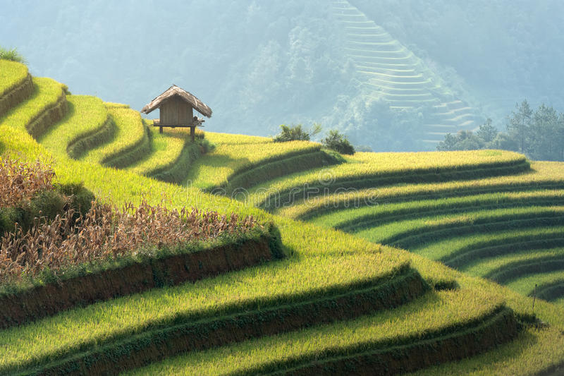 Поле риса красивого зеленого цвета ландшафта террасное в cang chai Mu, y стоковое фото rf