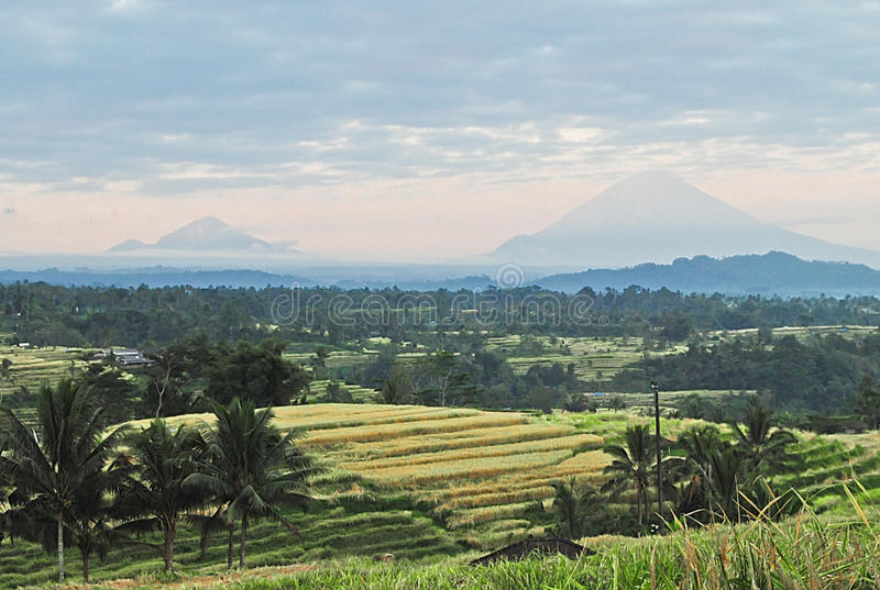 Поле риса на Бали стоковое фото
