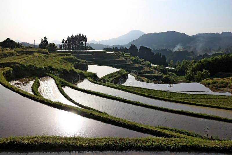 Поле риса сельской местности стоковая фотография