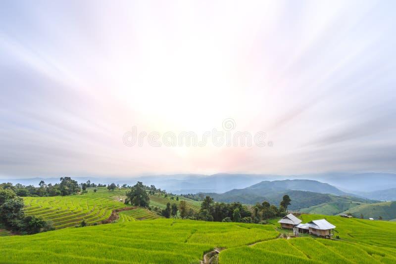 Поле сезона дождей, главная туристическая достопримечательность риса природы зеленое террасное в PA Pong Pieng, Mae Chaem, Chiang стоковое изображение