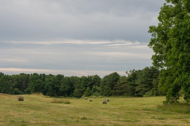 Download Поле сена стоковое изображение. изображение насчитывающей поле - 81806751