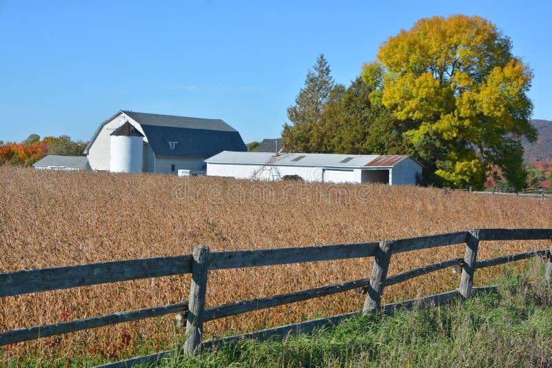 Поле сои в фронте ферма стоковая фотография rf