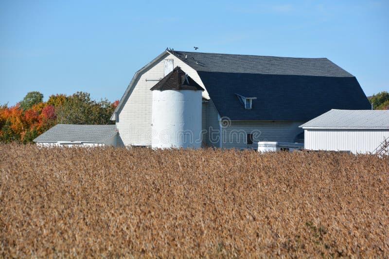 Поле сои в фронте ферма стоковое фото rf