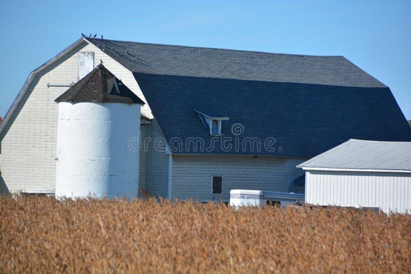 Поле сои в фронте ферма стоковое фото