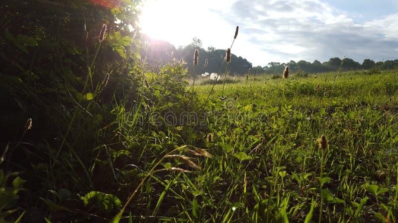 поле солнечное стоковые фотографии rf