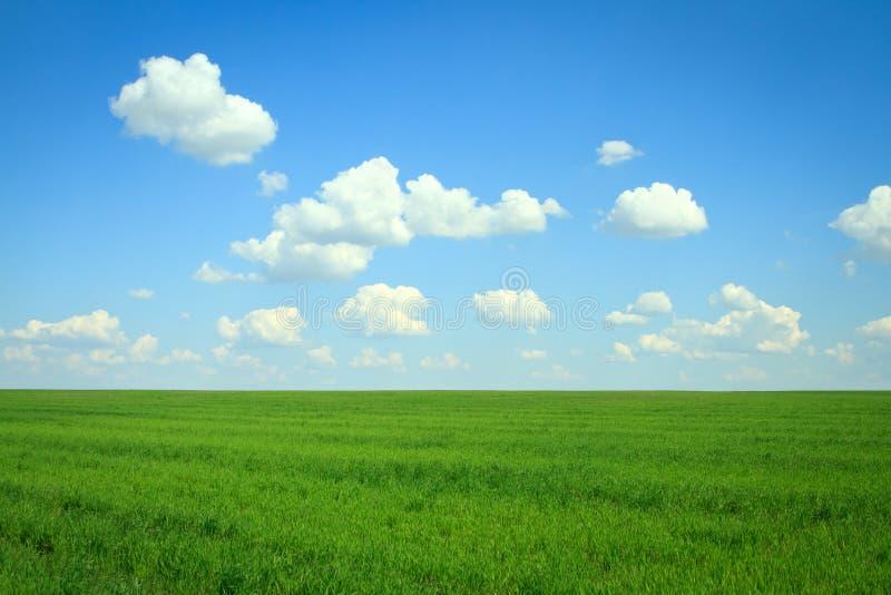 Download Поле с зеленой травой и облаками Стоковое Изображение - изображение насчитывающей cloudscape, цветасто: 33730273