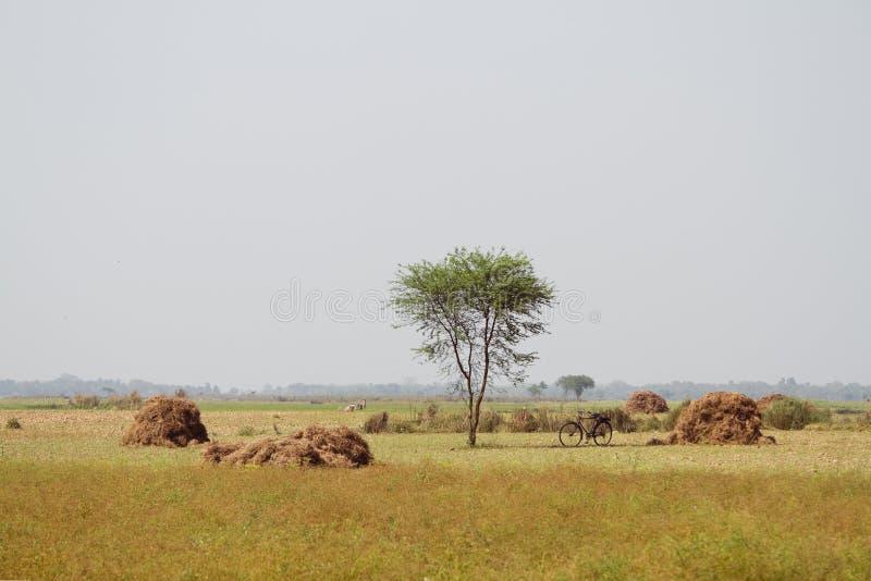 Поле с haystacks стоковая фотография rf