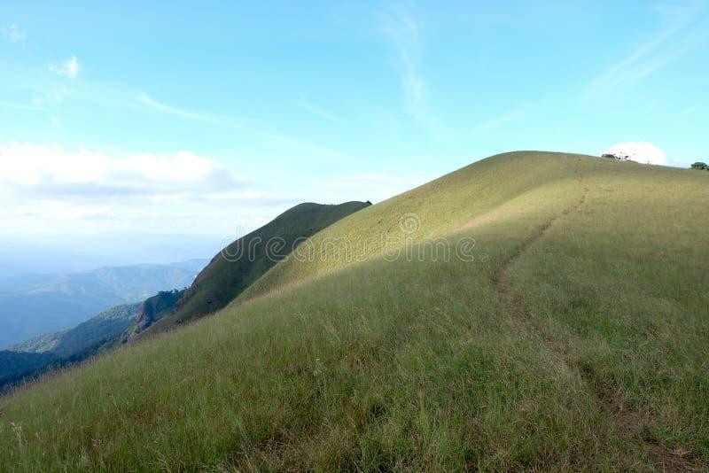 Поле травы на высокой горе стоковая фотография