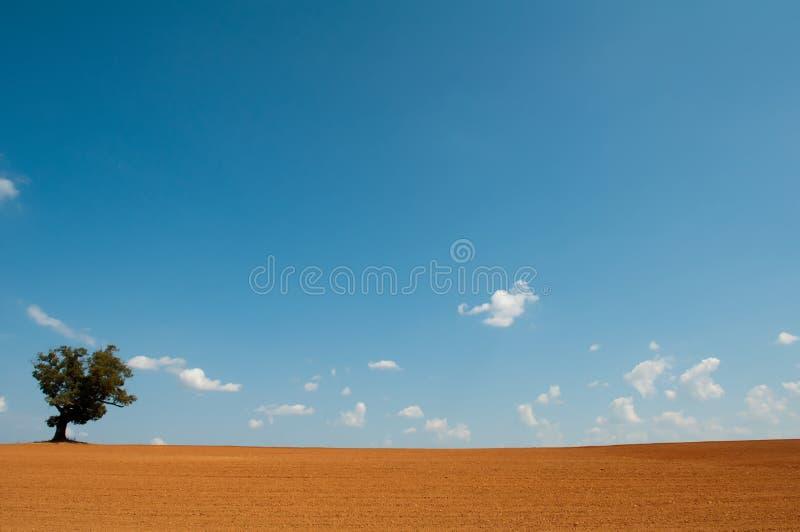 Поле фермы с уединённым деревом стоковая фотография