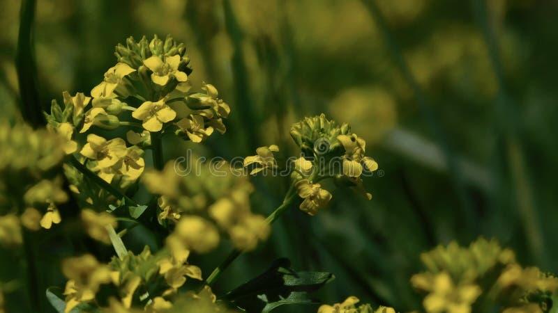 поле цветет желтый цвет весны макроса стоковые фотографии rf
