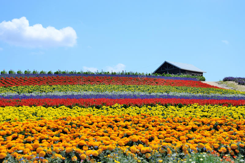 Поле цветка стоковые фото
