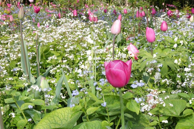 Поле цветков стоковые изображения rf
