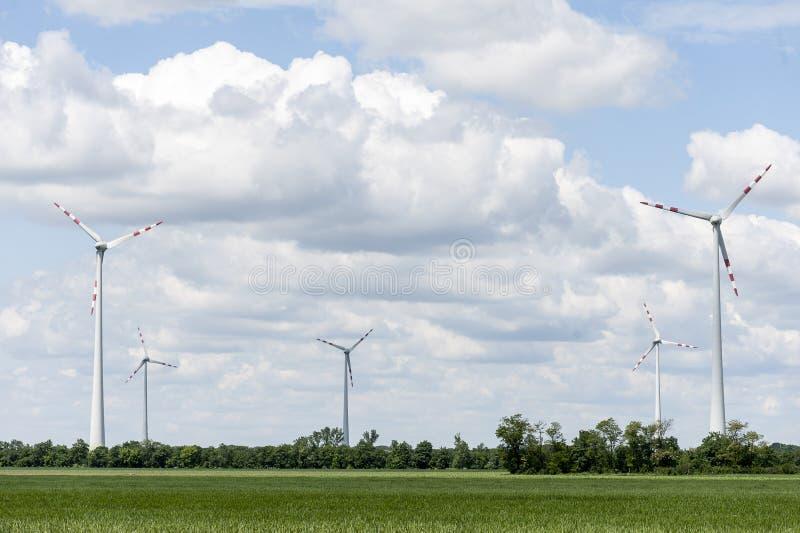 Поле энергии ветра на летний день стоковые фото