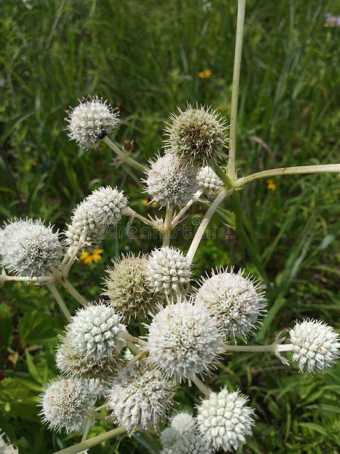 Поле Wildflower Огайо стоковое фото