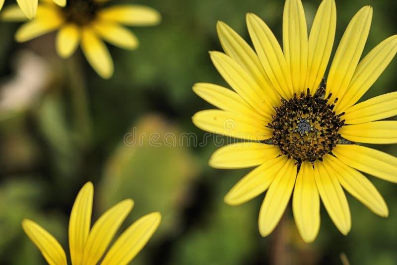 Поле Wildflowers стоковые фотографии rf