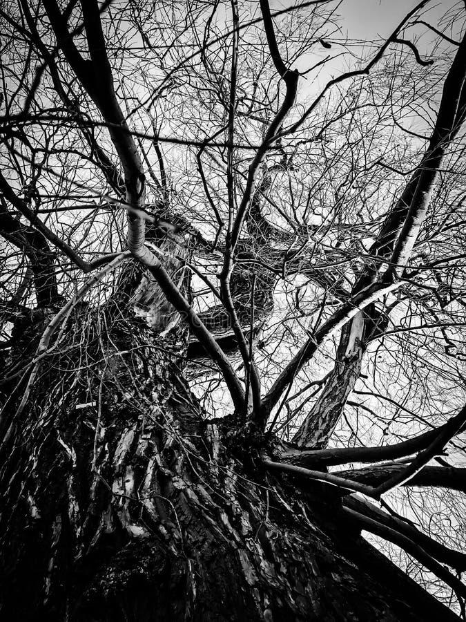 Подливной ветвей ствола дерева стоковое изображение
