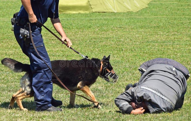 Полиция укомплектовывает личным составом и его собака стоковая фотография