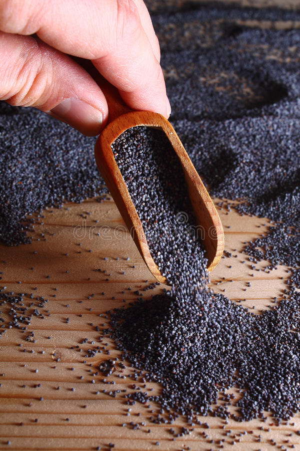по мере того как предпосылка может польза маковых семенен стоковое фото rf