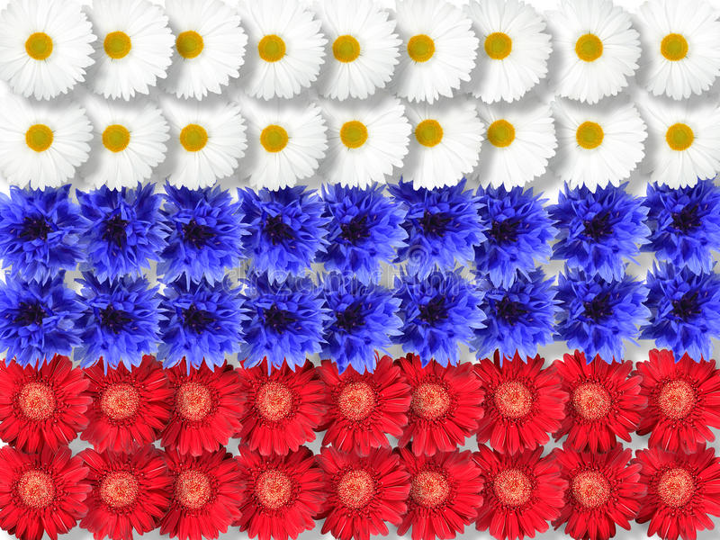 по мере того как флаг предпосылки цветет Россия стоковое фото rf