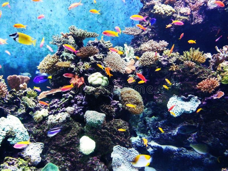 Под морем