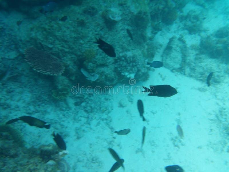 Под морем стоковое изображение rf