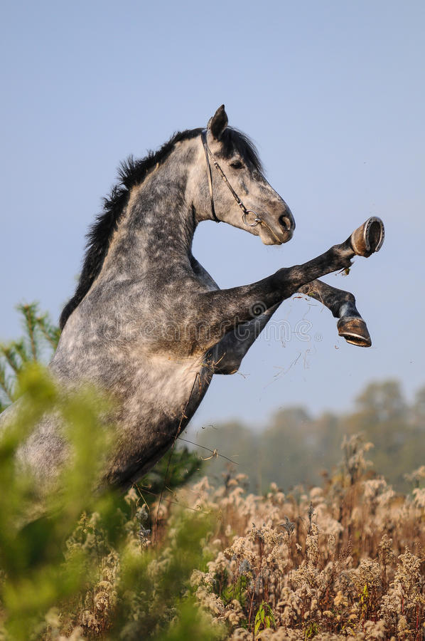 Поднимать лошадь стоковая фотография rf