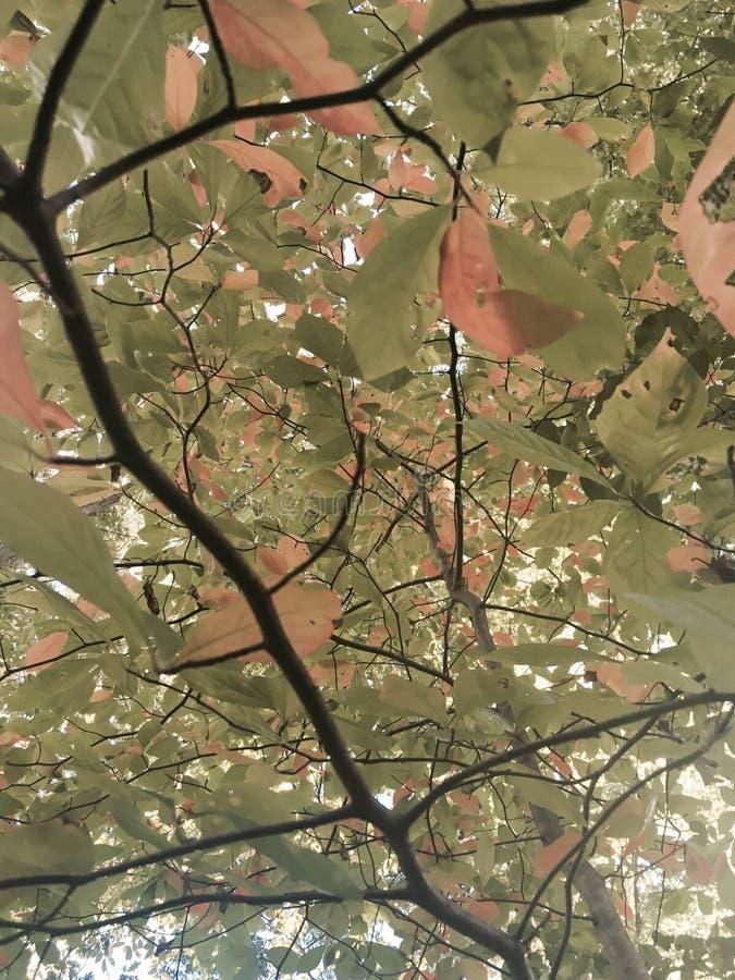 поднимающее вверх цветения близкое стоковые фото