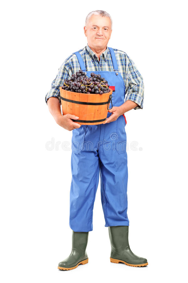 Полнометражный портрет виноторговца держа ведро виноградин стоковые фотографии rf